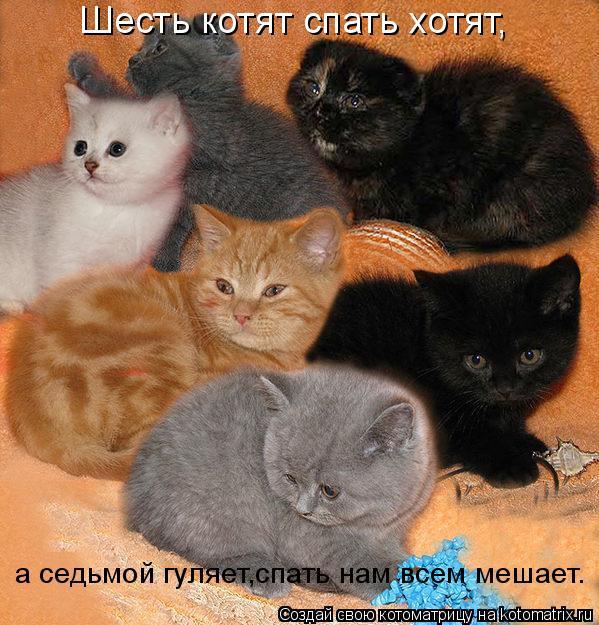 Котоматрица: Шесть котят спать хотят, а седьмой гуляет,спать нам всем мешает.