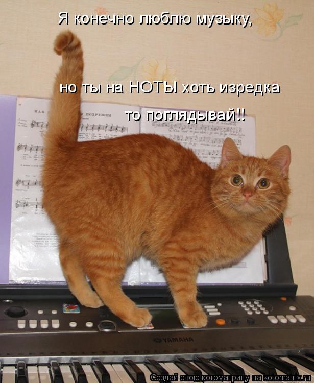 Котоматрица: Я конечно люблю музыку, но ты на НОТЫ хоть изредка то поглядывай!!