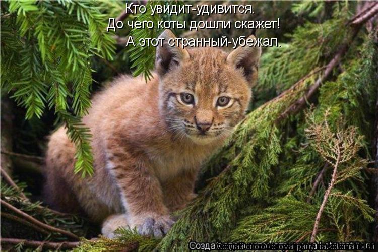 Котоматрица: Кто увидит-удивится.  До чего коты дошли скажет!  А этот странный-убежал.