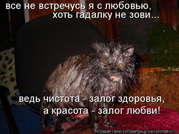 Котоматрица: все не встречусь я с любовью,  хоть гадалку не зови... ведь чистота - залог здоровья,  а красота - залог любви!