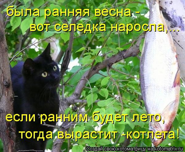 Котоматрица: была ранняя весна -  вот селедка наросла,... если ранним будет лето, тогда вырастит -котлета!