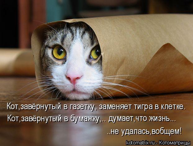 Котоматрица: Кот,завёрнутый в газетку, заменяет тигра в клетке. Кот,завёрнутый в бумажку,.. думает,что жизнь... ..не удалась,вобщем!