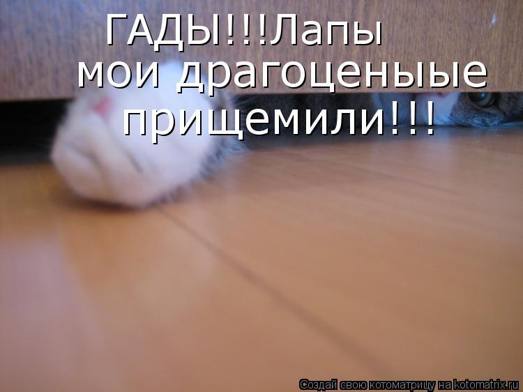 Котоматрица: ГАДЫ!!!Лапы  мои драгоценыые прищемили!!!