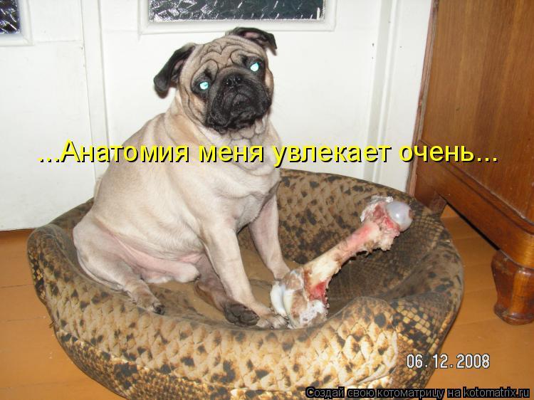 Котоматрица: ...Анатомия меня увлекает очень...
