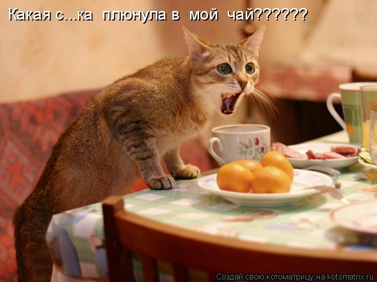 Котоматрица: Какая с...ка  плюнула в  мой  чай??????