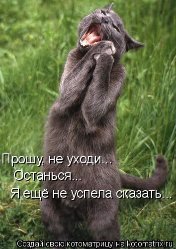 Котоматрица: Прошу, не уходи...  Прошу, не уходи...  Останься...   Я ещё не успела сказать...  Я ещё не успела сказать...