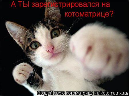 Котоматрица: котоматрице? А ТЫ зарегистрировался на