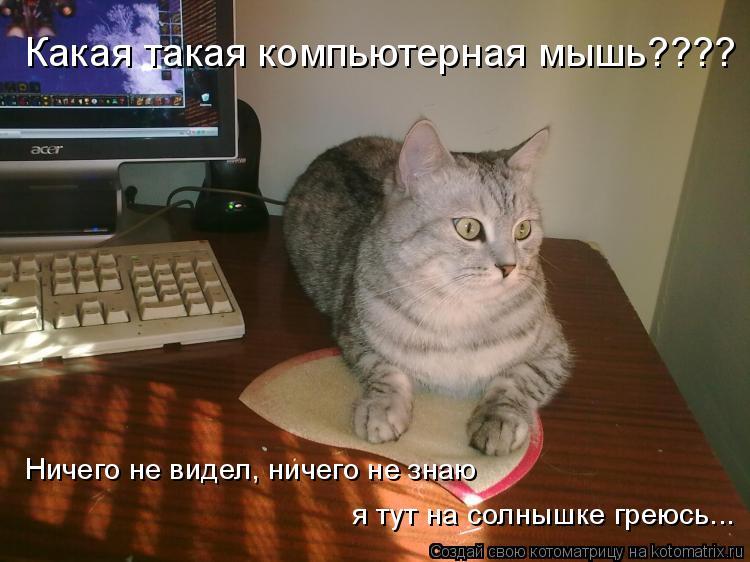 Котоматрица: Какая такая компьютерная мышь???? Ничего не видел, ничего не знаю я тут на солнышке греюсь...