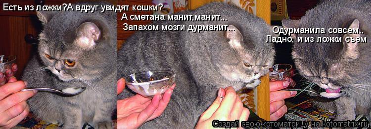 Котоматрица: Есть из ложки?А вдруг увидят кошки? Одурманила совсем.. Ладно, и из ложки съем А сметана манит,манит... Запахом мозги дурманит...