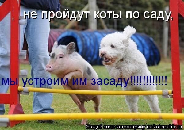 Котоматрица: не пройдут коты по саду, мы устроим им засаду!!!!!!!!!!!!