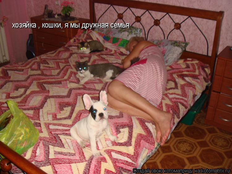 Котоматрица: хозяйка , кошки, я мы дружная семья