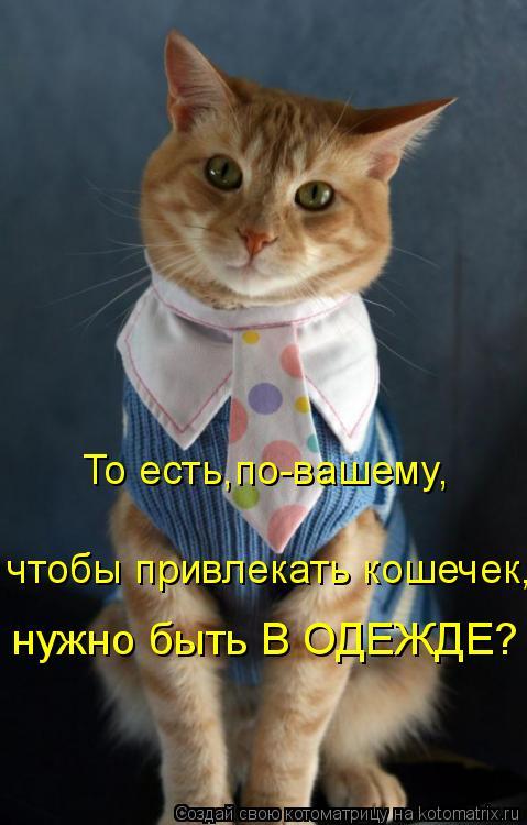Котоматрица: То есть,по-вашему, чтобы привлекать кошечек, нужно быть В ОДЕЖДЕ?