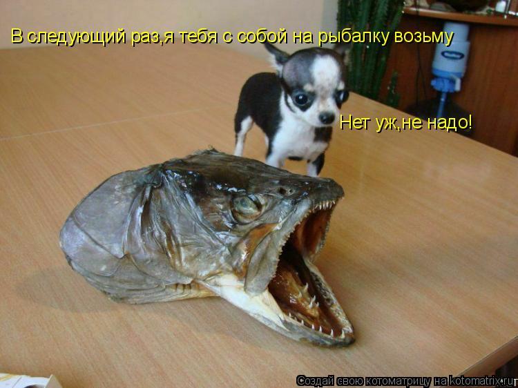 Котоматрица: В следующий раз,я тебя с собой на рыбалку возьму Нет уж,не надо!