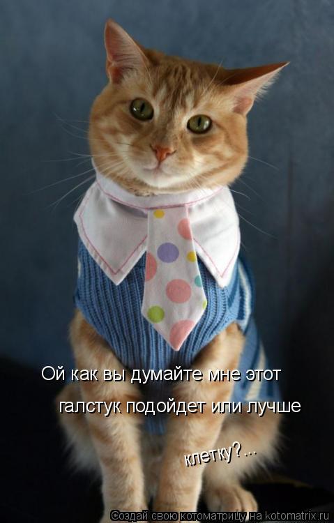 Котоматрица: Ой как вы думайте мне этот галстук подойдет или лучше  клетку?...