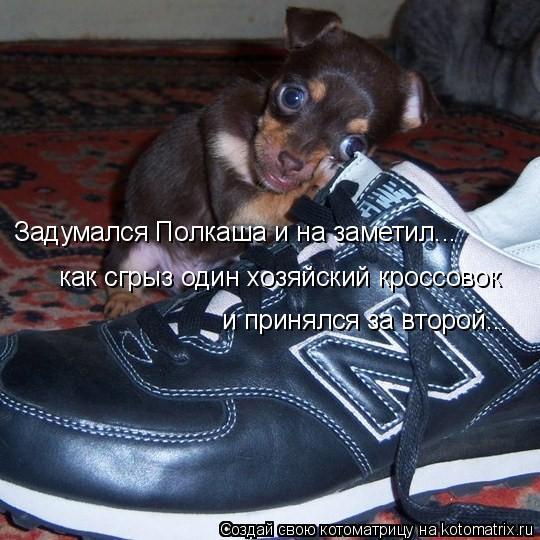 Котоматрица: Задумался Полкаша и на заметил... как сгрыз один хозяйский кроссовок и принялся за второй...