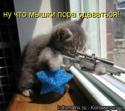 Котоматрица: ну что мышки пора сдаваться!
