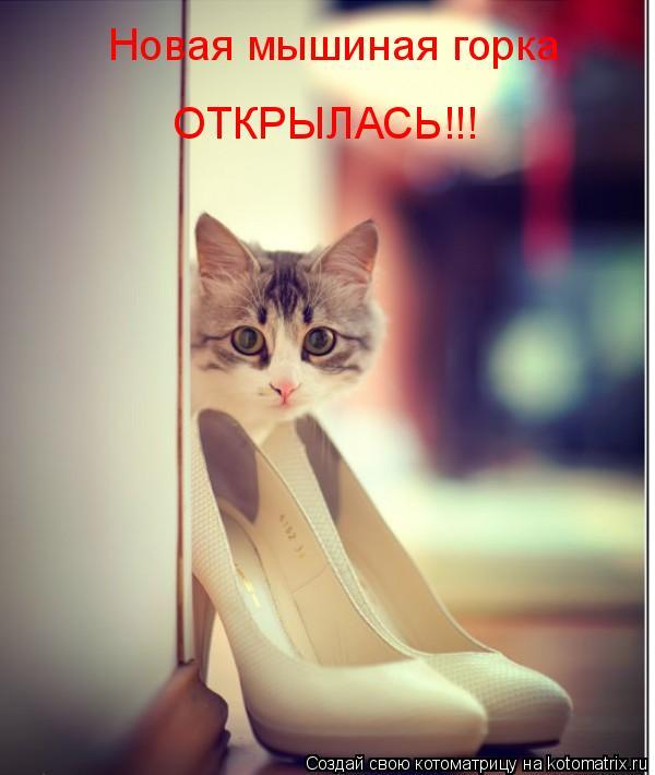 Котоматрица: Новая мышиная горка ОТКРЫЛАСЬ!!!