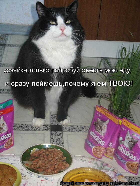 Котоматрица: хозяйка,только попробуй съесть мою еду, и сразу поймешь,почему я ем ТВОЮ!