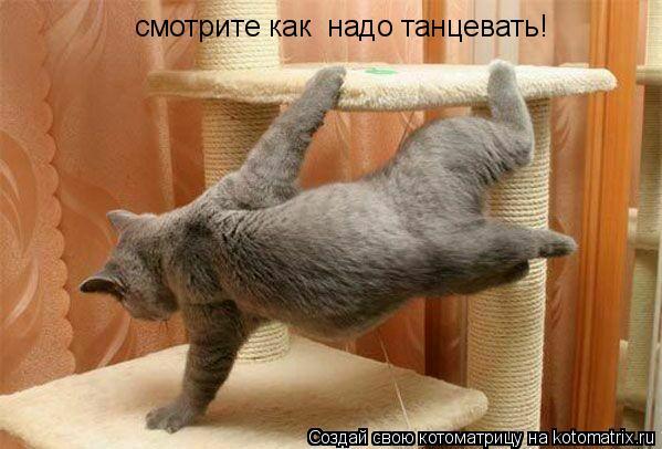 Котоматрица: смотрите как  надо танцевать!