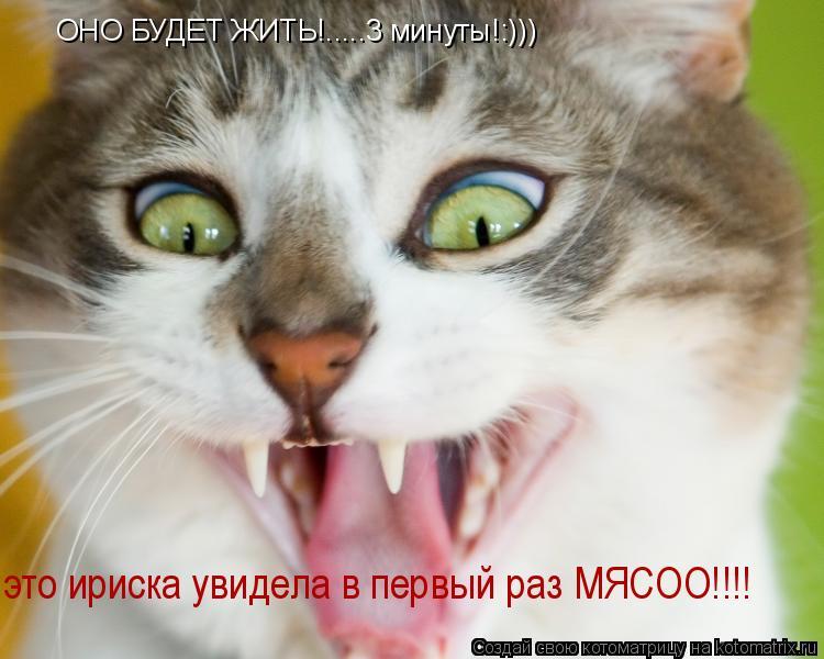 Котоматрица: ОНО БУДЕТ ЖИТЬ!.....3 минуты!:))) это ириска увидела в первый раз МЯСОО!!!!