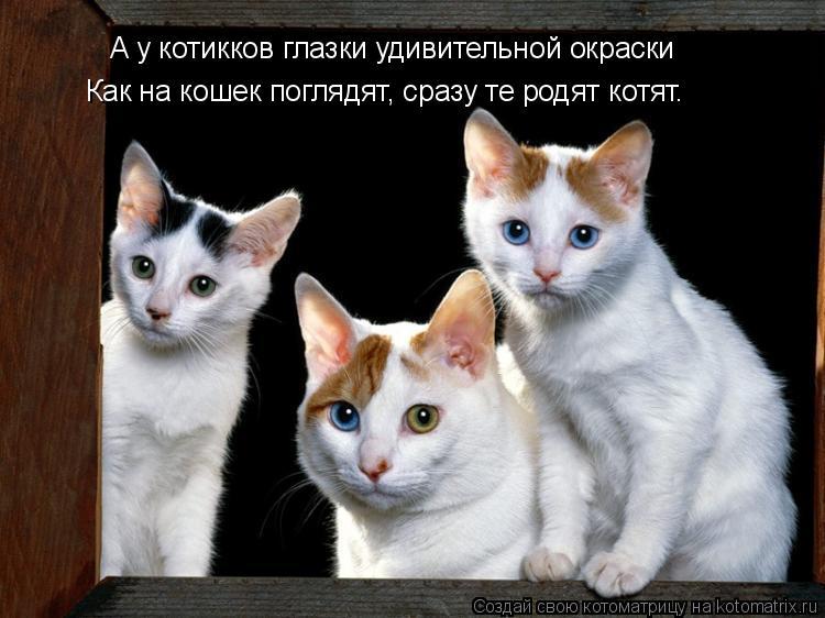 Котоматрица: А у котикков глазки удивительной окраски Как на кошек поглядят, сразу те родят котят.