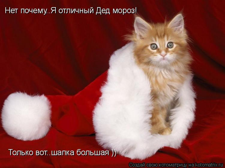 Котоматрица: Нет почему..Я отличный Дед мороз! Только вот..шапка большая ))