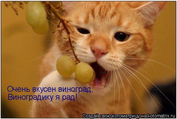 Котоматрица: Очень вкусен виноград, Виноградику я рад!