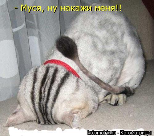 Котоматрица: - Муся, ну накажи меня!!