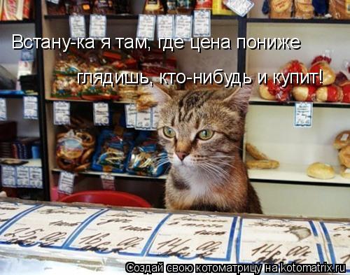 Котоматрица: Встану-ка я там, где цена пониже глядишь, кто-нибудь и купит!