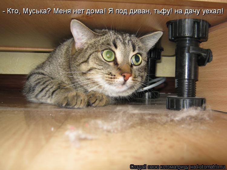 Котоматрица: - Кто, Муська? Меня нет дома! Я под диван, тьфу! на дачу уехал!