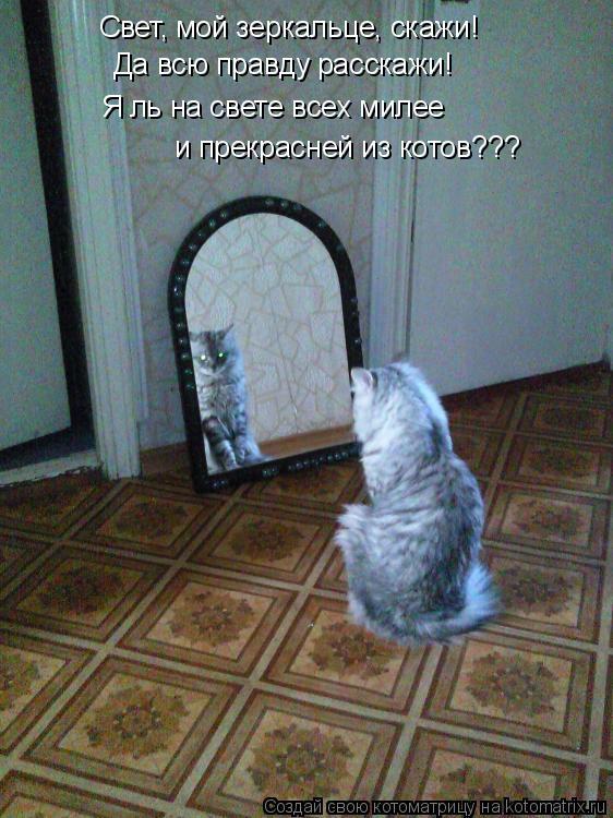 Котоматрица: Свет, мой зеркальце, скажи!  Да всю правду расскажи!  Я ль на свете всех милее  и прекрасней из котов???