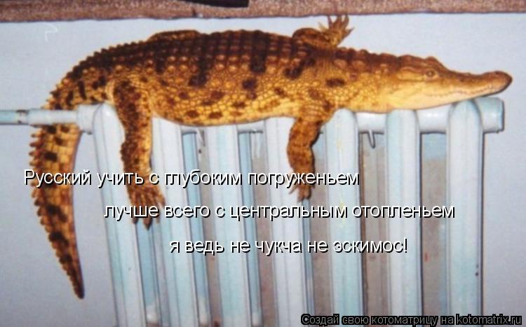 Котоматрица: Русский учить с глубоким погруженьем лучше всего с центральным отопленьем я ведь не чукча не эскимос!