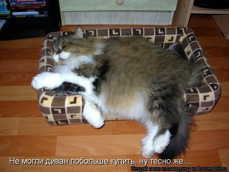 Котоматрица: Не могли диван побольше купить, ну тесно же....
