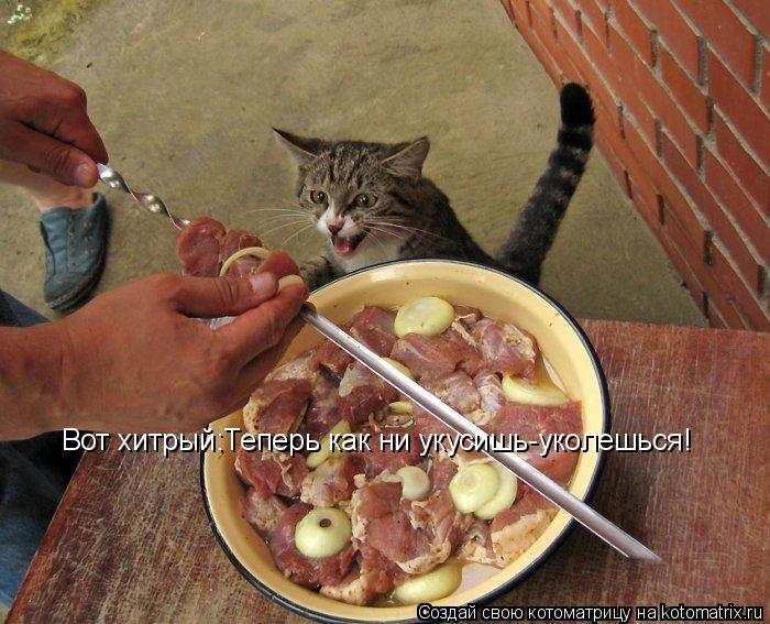 Котоматрица: Вот хитрый:Теперь как ни укусишь-уколешься!