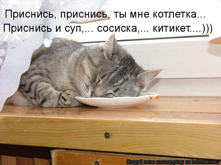 Котоматрица: Приснись, приснись, ты мне котлетка... Приснись и суп,... сосиска,... китикет....)))