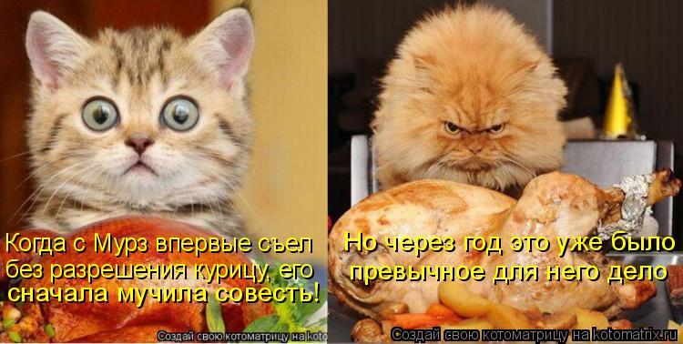 Котоматрица: Когда с Мурз впервые съел без разрешения курицу, его сначала мучила совесть! Но через год это уже было превычное для него дело
