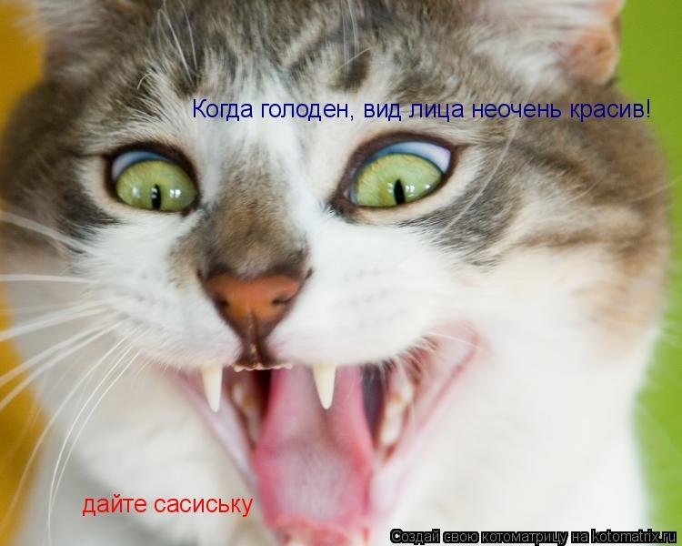 Котоматрица: Когда голоден, вид лица неочень красив! дайте сасиську
