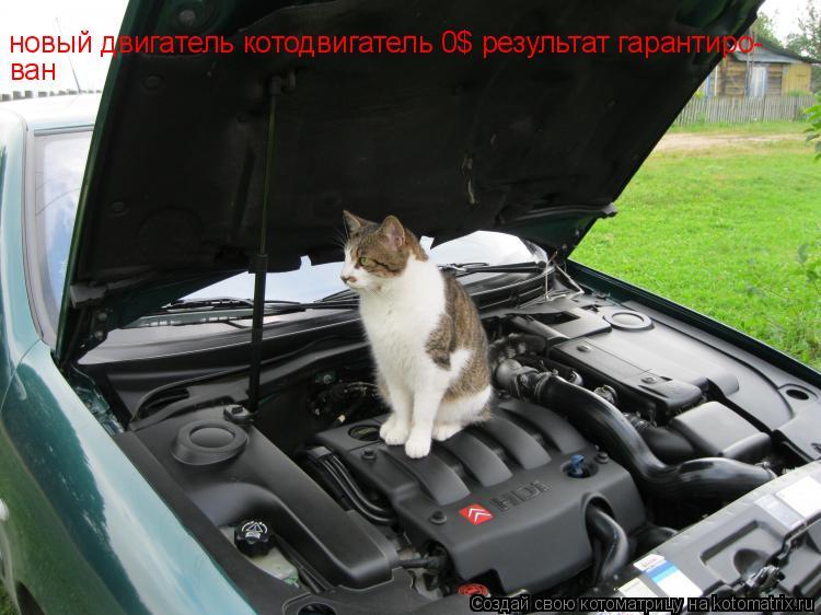 Котоматрица: новый двигатель котодвигатель 0$ результат гарантиро- ван