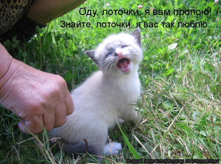 Котоматрица: Оду, лоточки, я вам пропою! Знайте, лоточки, я вас так люблю.....