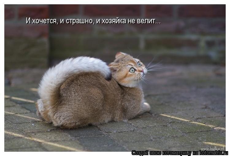 Котоматрица: И хочется, и страшно, и хозяйка не велит...