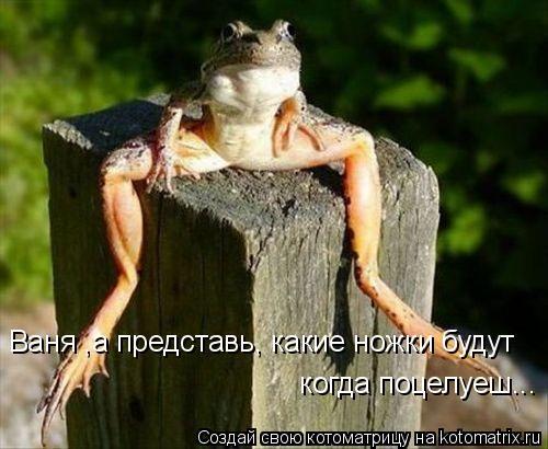 Котоматрица: Ваня ,а представь, какие ножки будут  когда поцелуеш...