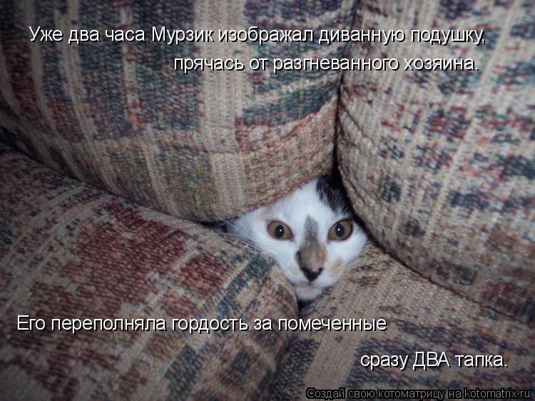 Котоматрица: Уже два часа Мурзик изображал диванную подушку,  прячась от разгневанного хозяина.  Его переполняла гордость за помеченные  сразу ДВА тапка