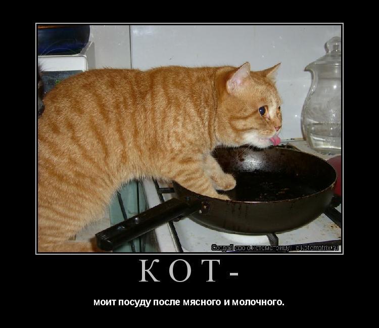 Котоматрица: Кот- моит посуду после мясного и молочного.