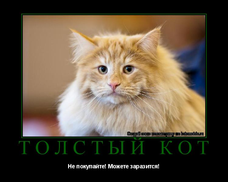 Котоматрица: Толстый кот Не покупайте! Можете заразится!