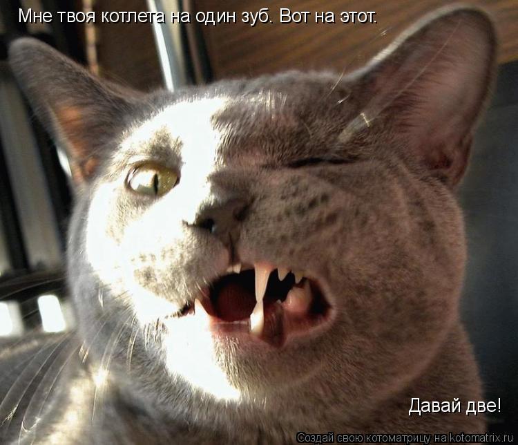 Котоматрица: Мне твоя котлета на один зуб. Вот на этот. Давай две!