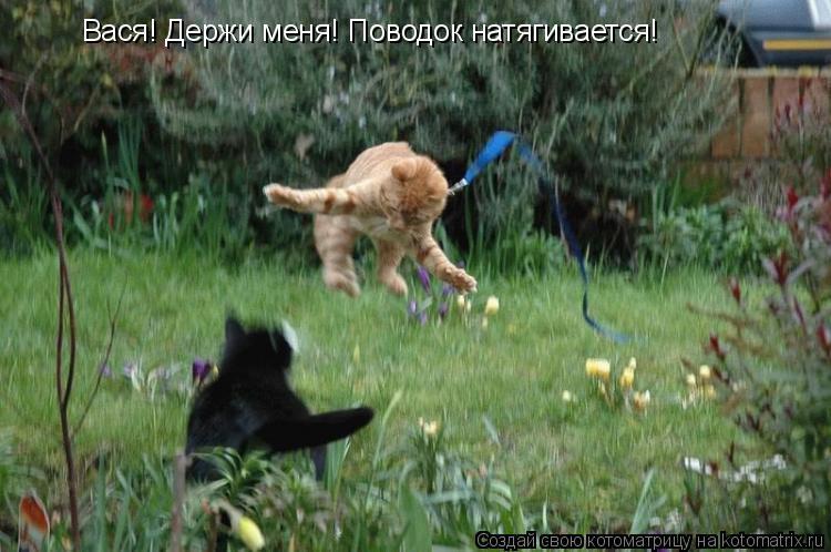 Котоматрица: Вася! Держи меня! Поводок натягивается!