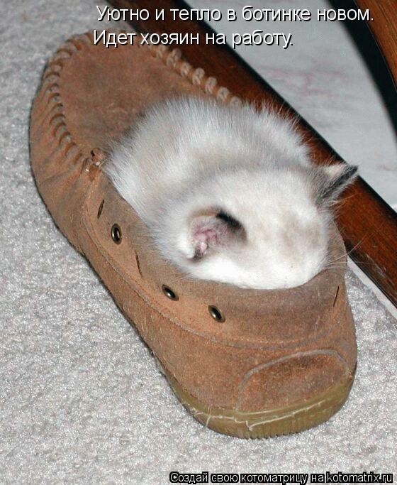 Котоматрица: Уютно и тепло в ботинке новом.   Идет хозяин на работу.