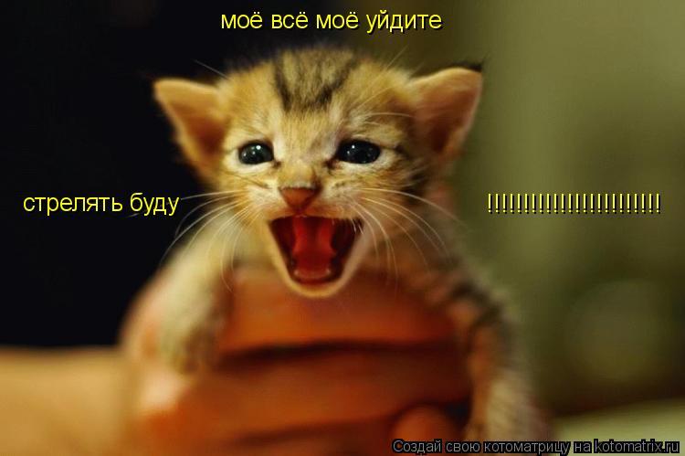 Котоматрица: моё всё моё уйдите стрелять буду !!!!!!!!!!!!!!!!!!!!!!!!