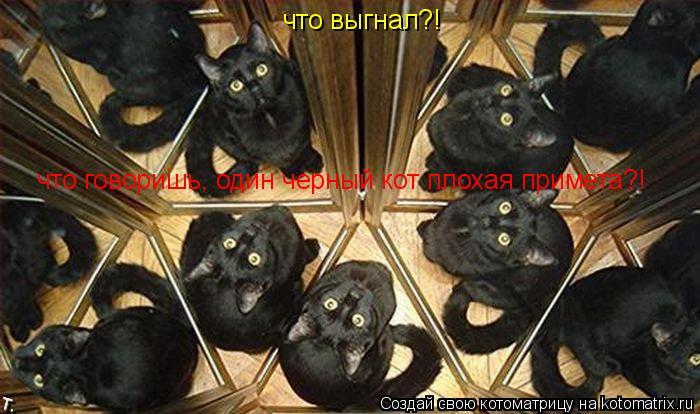 Котоматрица: что выгнал?! что говоришь, один черный кот плохая примета?!