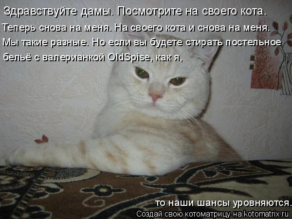 Котоматрица: Здравствуйте дамы. Посмотрите на своего кота.  Теперь снова на меня. На своего кота и снова на меня. Мы такие разные. Но если вы будете стират